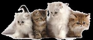kattenpension